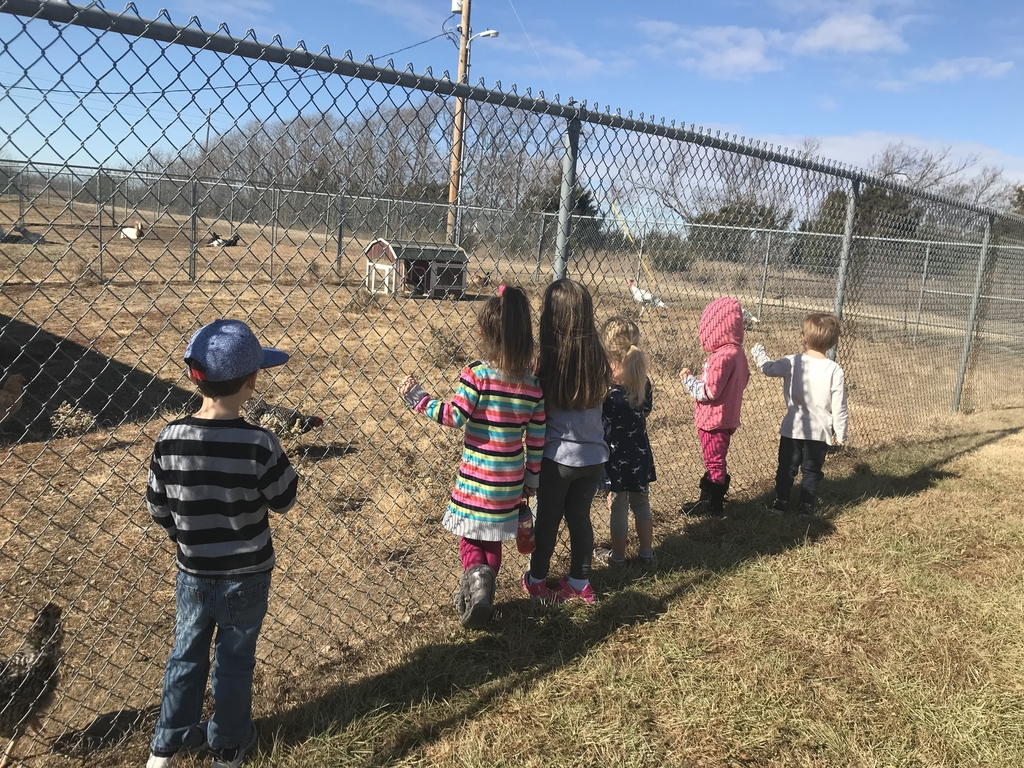 Early childhood afternoon class checking out the two Heritage turkeys during AG class.